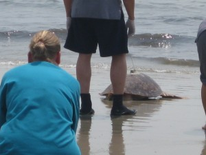 Sea Turtle Release Photo 4