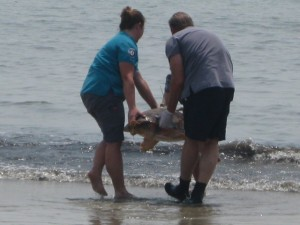 Sea Turtle Release Photo 6