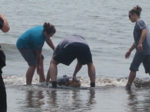 Sea Turtle Release Photo 7