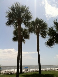 Palm Trees St Simons Island