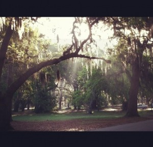 Under The Live Oaks