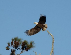 Bird Watching on St. Simons Island