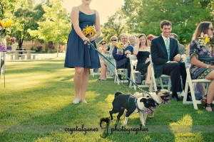 Dog with Bridesmaid