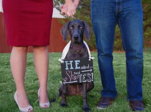 Wedding Announcement with Dog