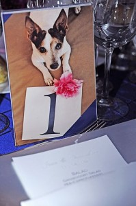 Dog-themed Table Numbers