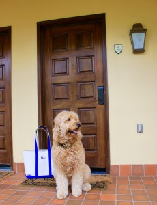 Dog-Friendly Rooms